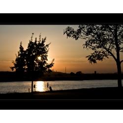 Baum 2 am Abend (Rhein-Duisburg)
