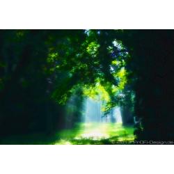 MysticForest