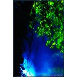 TreeWaterDust